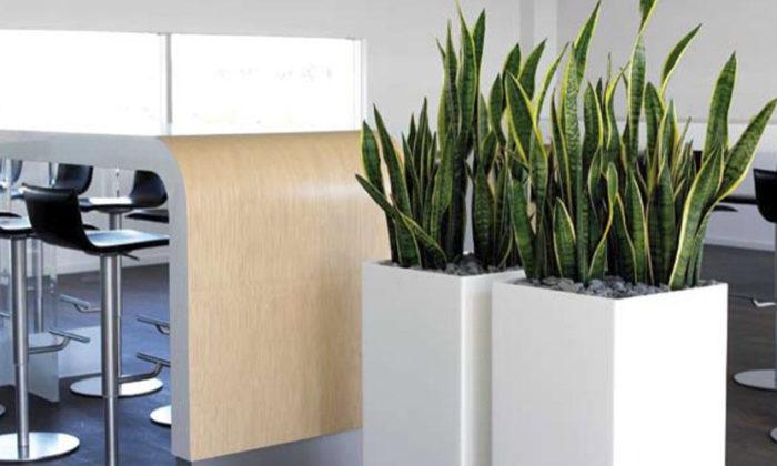 rośliny do biura, opieka nad roślinami warszawa